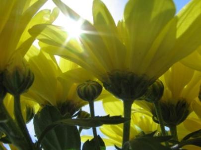 Sun through Flowers