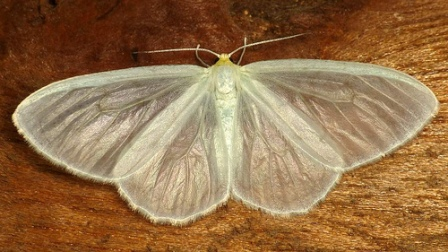 White Moth by Andreas Kay