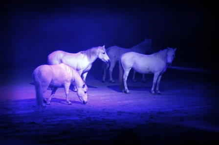 Horses at Midnight