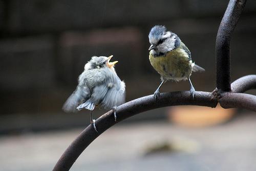 Mama and baby bird photo by Yuwen Teo